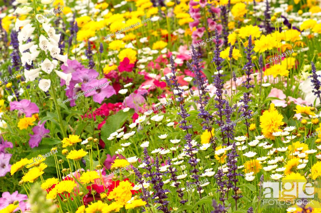 Stock Photo: wildflowers.