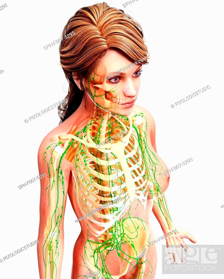 Female Lymphatic System Computer Artwork Stock Photo Picture And