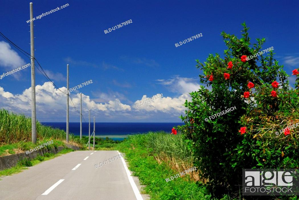 Stock Photo: Hibiscus and road.