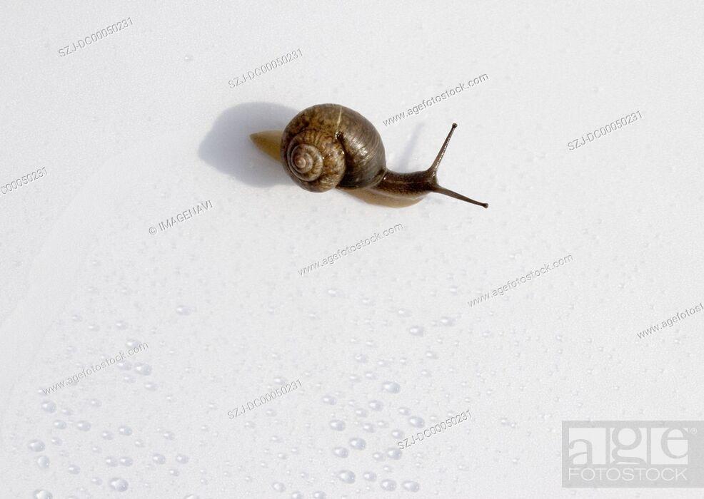 Imagen: Snail.