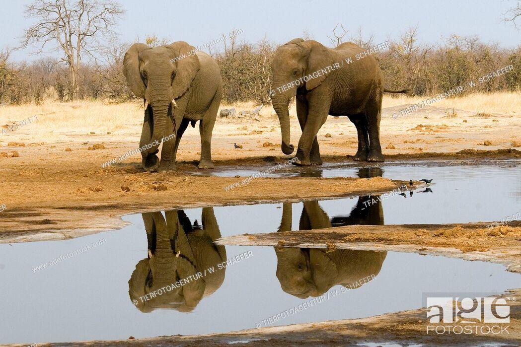 Imagen: african elephant.