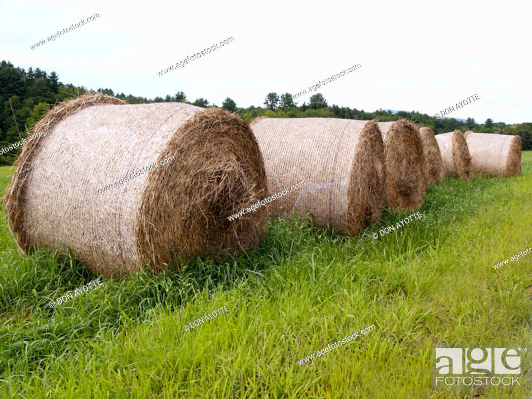 Stock Photo: Hay field outside Montreal. Quebec. Canada.