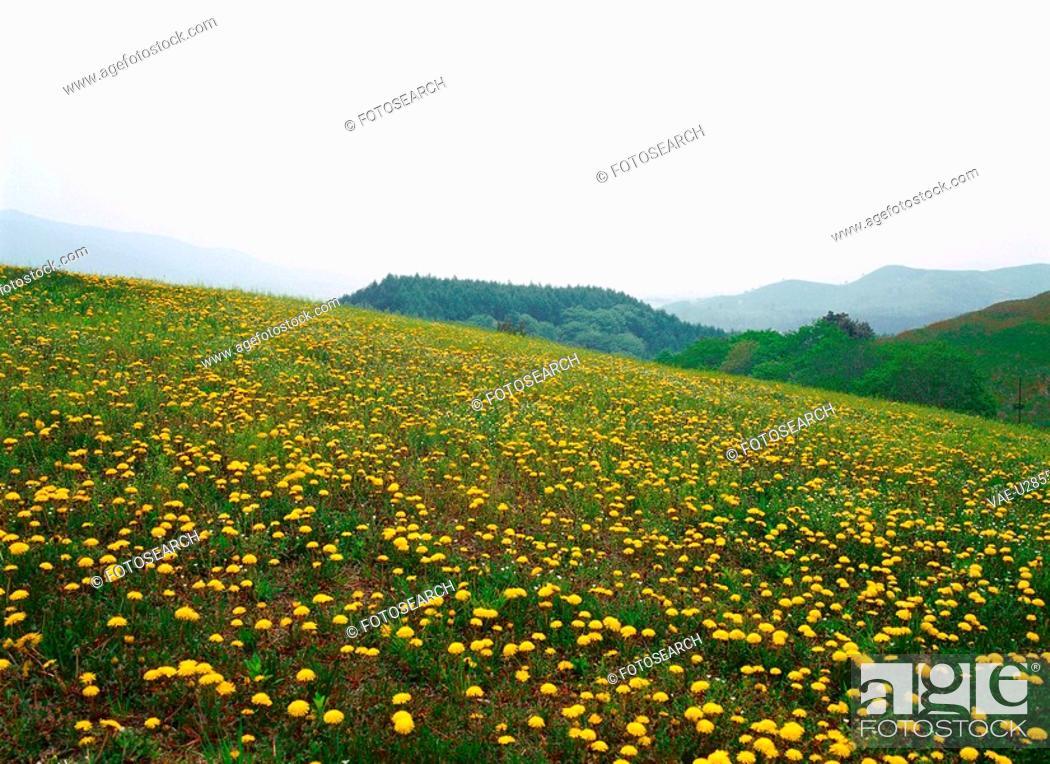 Stock Photo: dandelion, nature, flower, plant, scenery, film.