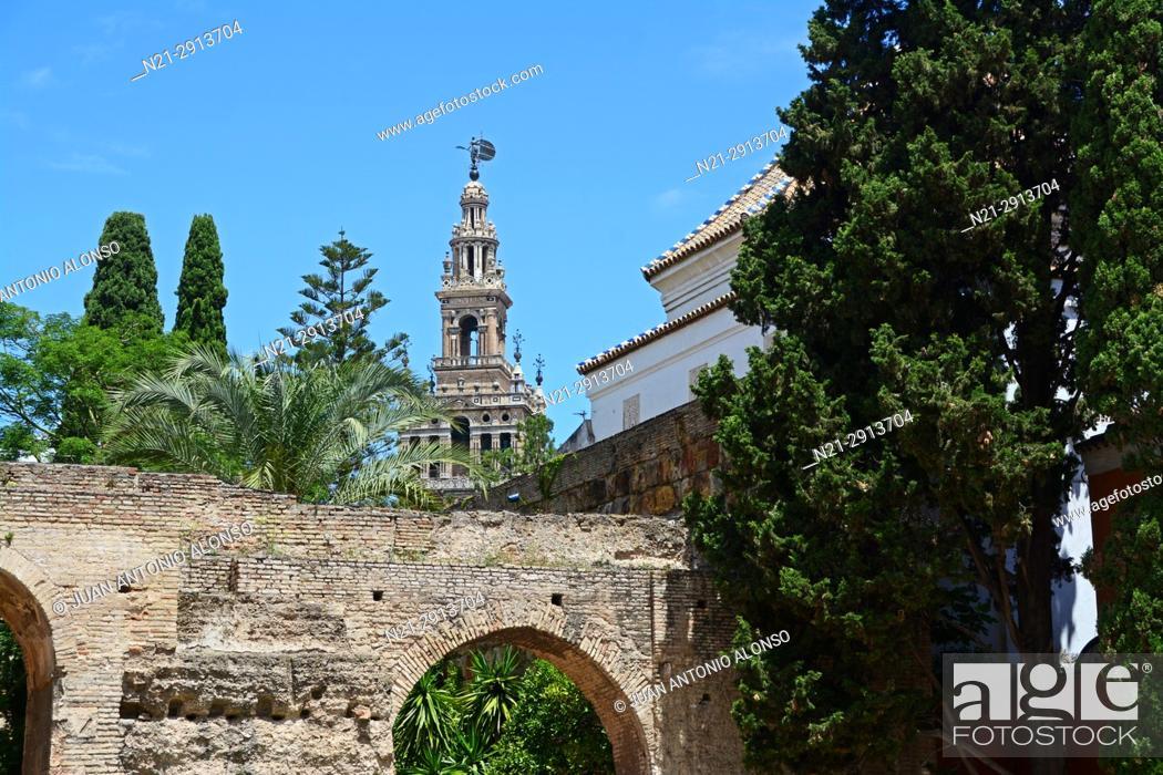 Stock Photo: La Giralda as seen from the Patio de la Monteria. Real Alcazar. Seville, Andalucia, Spain, Europe. Keywords:.