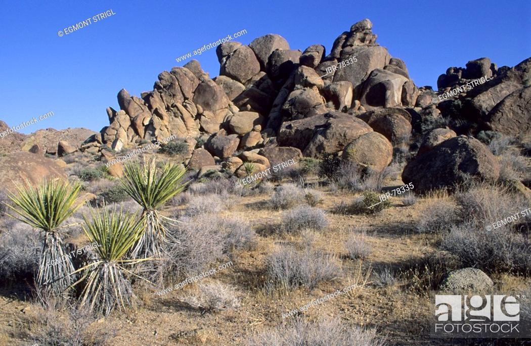 Imagen: Rocky landscape at Joshua Tree National Park, California, USA.
