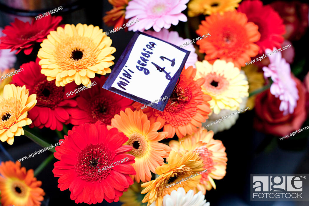 Stock Photo: Colourful Gerbera flowers.