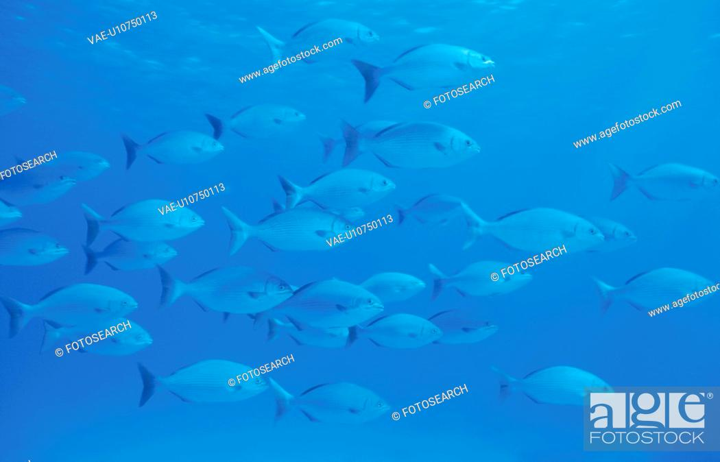 Stock Photo: A Shoal Of Fish.