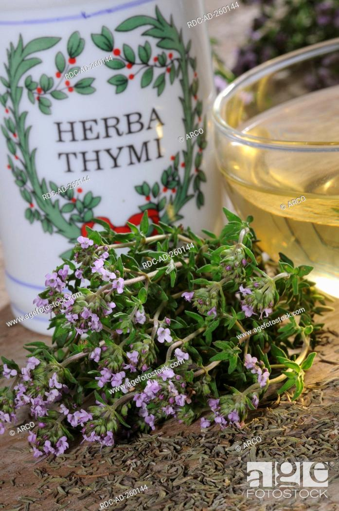 Stock Photo: Cup of Thyme tea Large Thyme Thymus pulegioides.