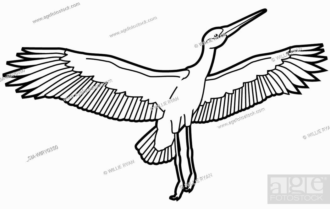 Imagen: Flying stork on white background.
