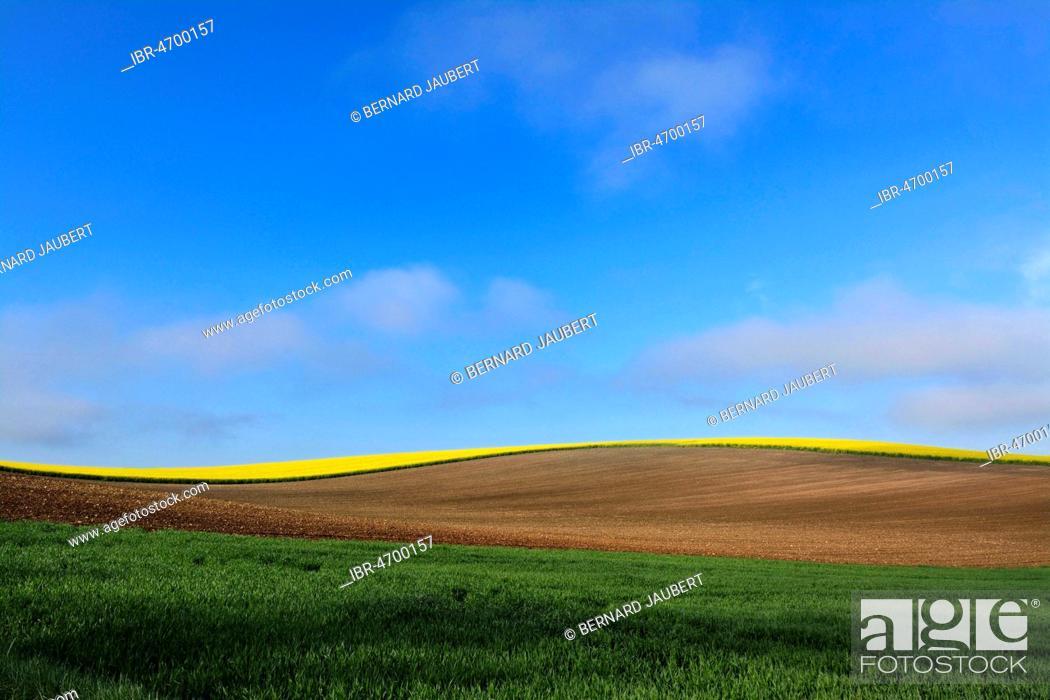 Stock Photo: Hilly agricultural landscape, Limagne plain, Puy de Dome department, Auvergne-Rhône-Alpes, France.