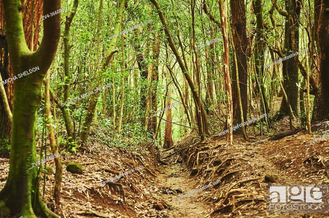 Stock Photo: Landscape of Rainforest at the Lulumahu trail to the Lulumahu falls, Honolulu Watershed Forest Reserve, Hawaiian Island Oahu, Hawaii, Aloha State, United States.