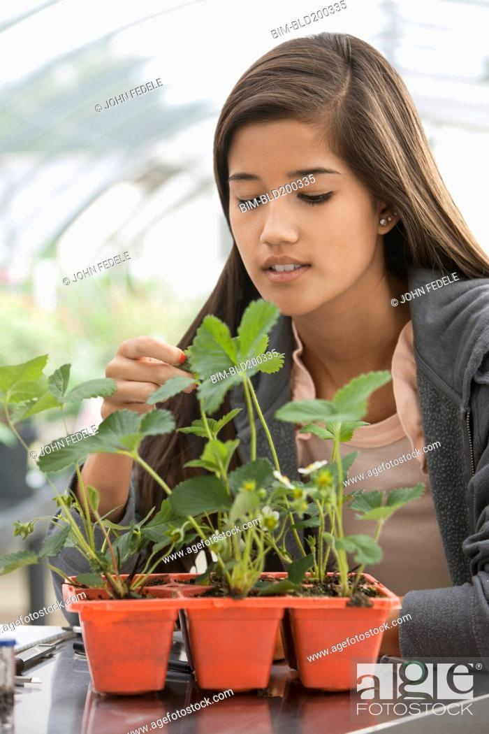 Stock Photo: Chinese student working in greenhouse.