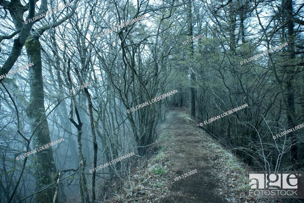 Stock Photo: Mystic, foggy path through a forest near Kawaguchi-ko, Japan.