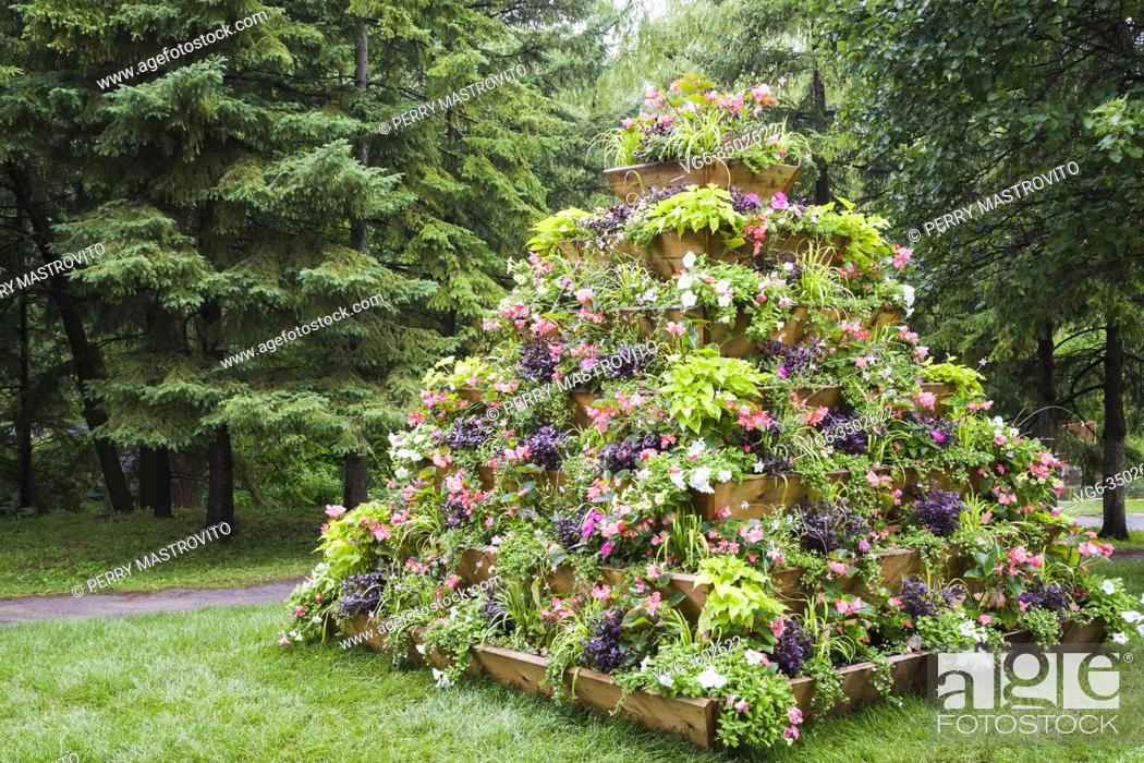 Stock Photo: Wooden pyramidal flower box arrangement with mixed plantings, white Petunia, pink Impatiens and Begonia flowers in summer, Centre de la Nature public garden.