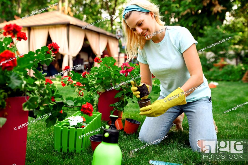Stock Photo: Smiling woman transplants flowers in the garden. Female gardener takes care of plants outdoor, gardening hobby, florist lifestyle and leisure.