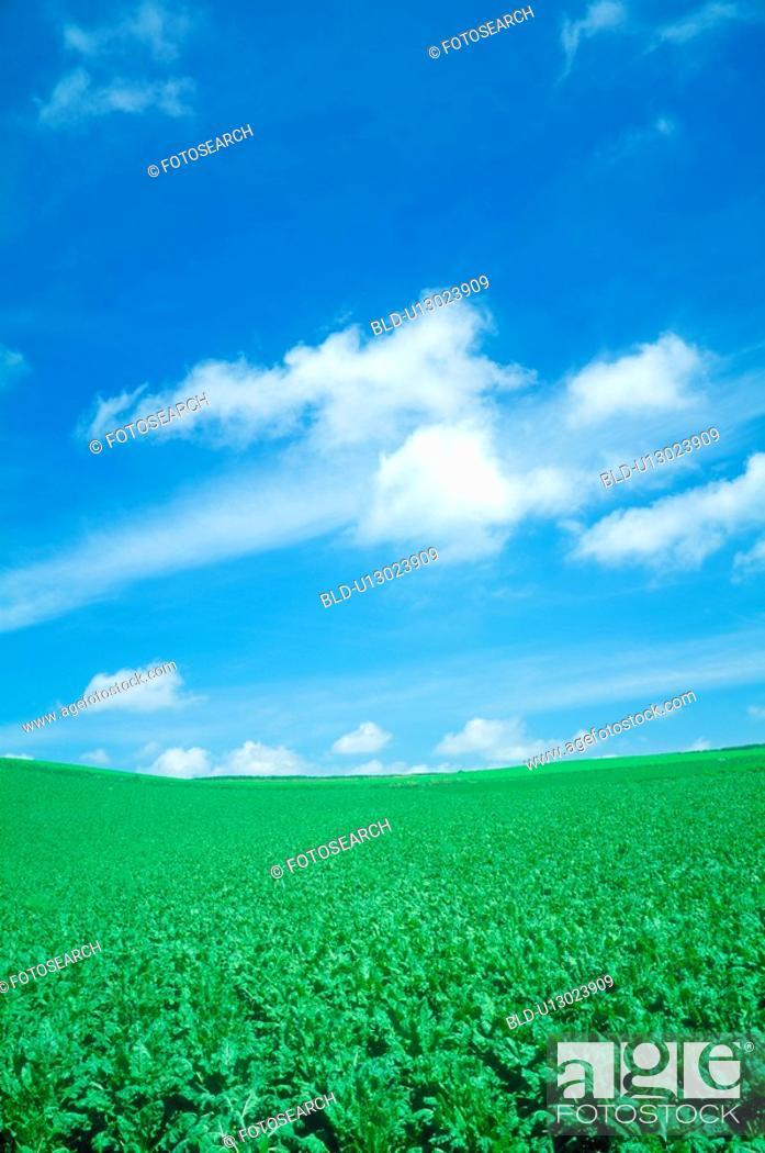 Stock Photo: Lake and blue sky(beat field).