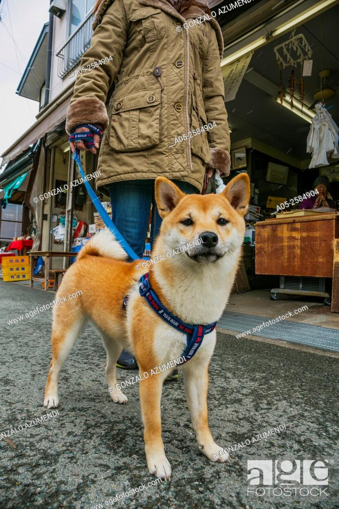 Imagen: Miyagawa Asaichi Market. Takayama, Hida Region, Gifu Prefecture. Japan.