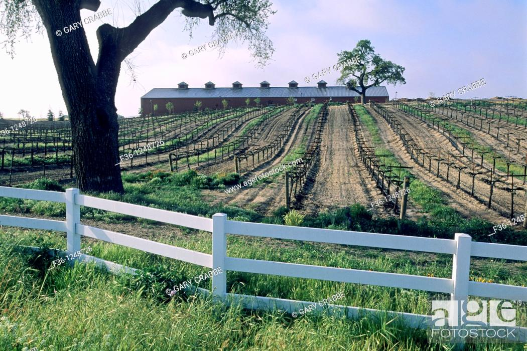 Stock Photo: Oak tree and rail fence at Robert Hall Winery, Paso Robles San Luis Obispo County, California.