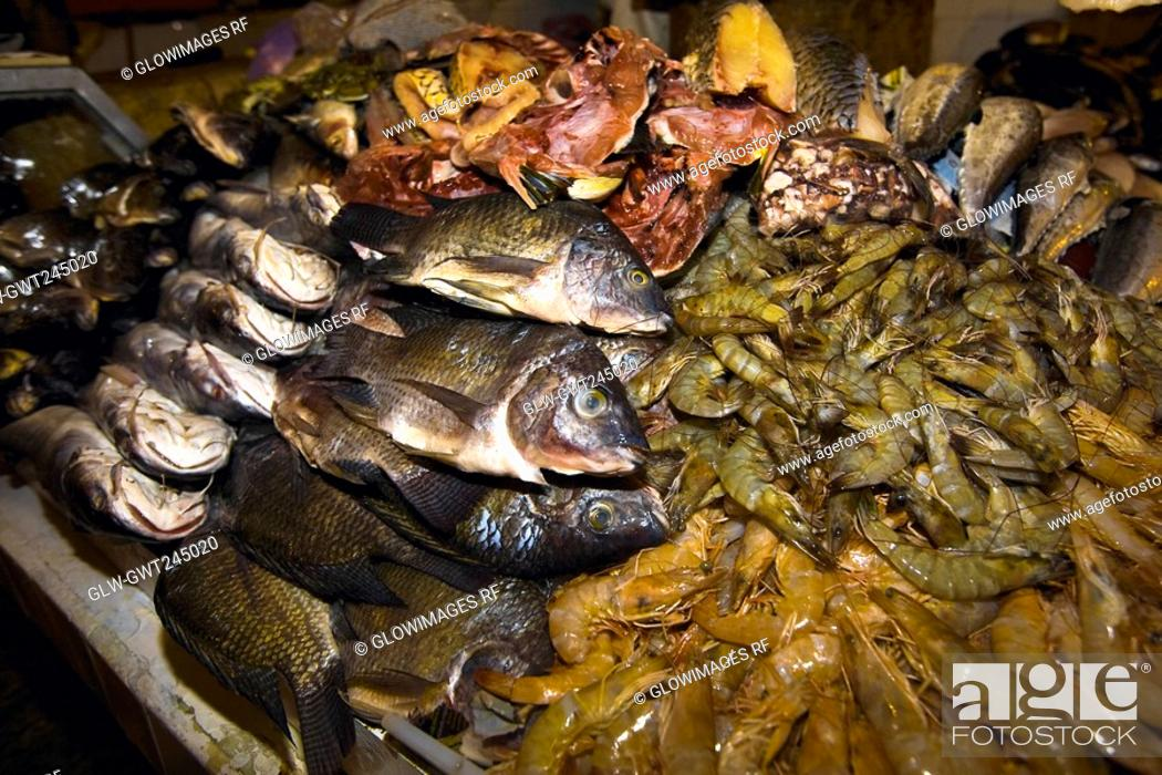 Stock Photo: Close-up of fish and lobsters in a fish market, Xochimilco, Mexico.