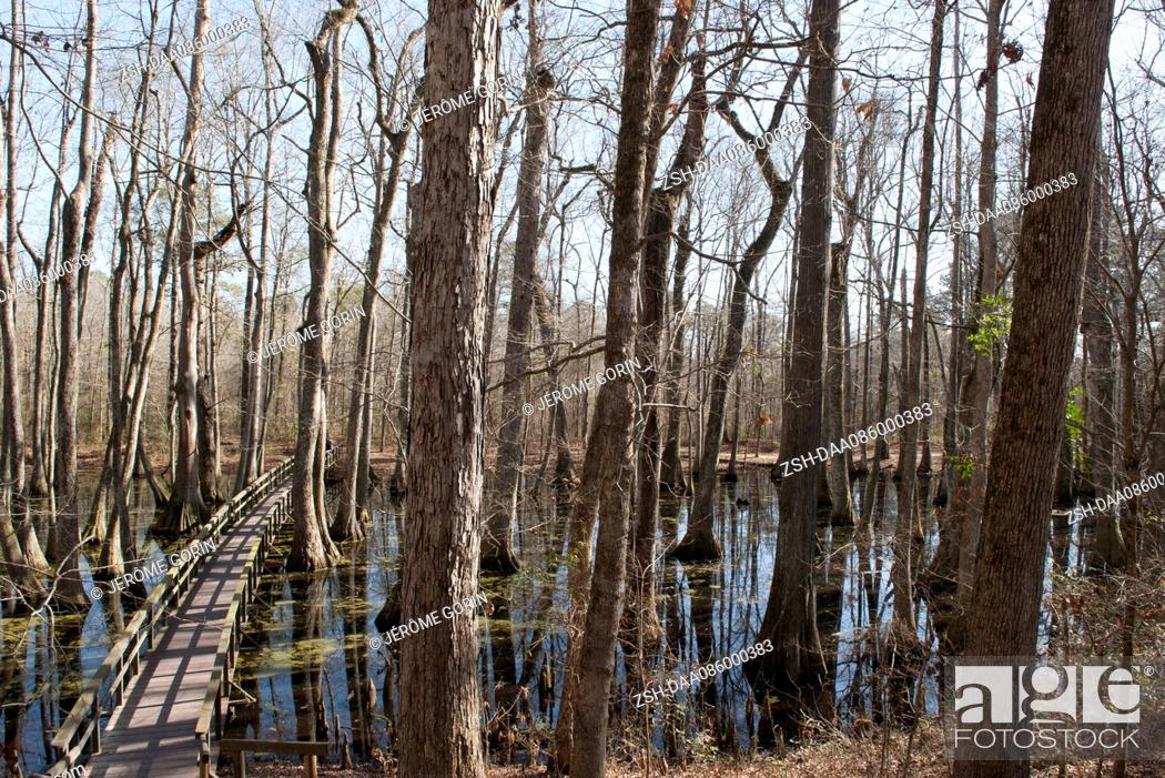 Stock Photo: Footbridge through swamp.