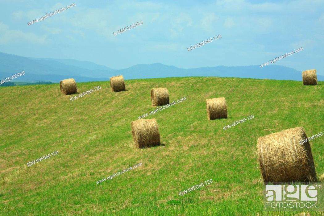 Stock Photo: Japan, Hokkaido, Biei, Hay bales in field.