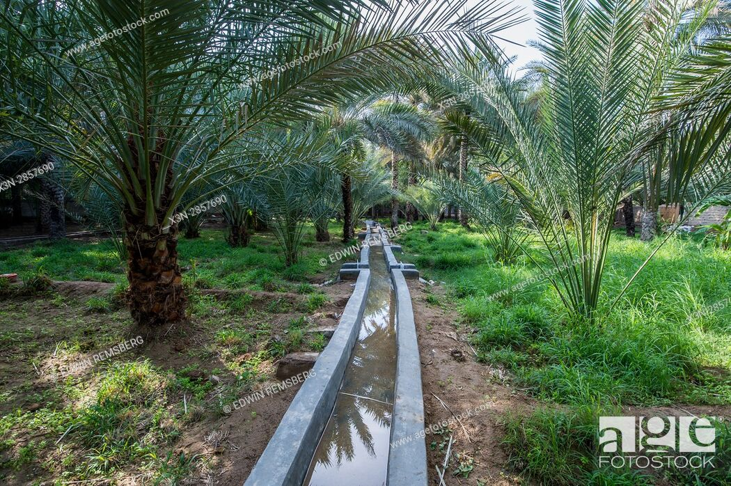Imagen: United Arab Emirates - View of the Al Ain Oasis and its centuries old irrigation system. It is the largest oasis in Abu Dhabi, UAE.