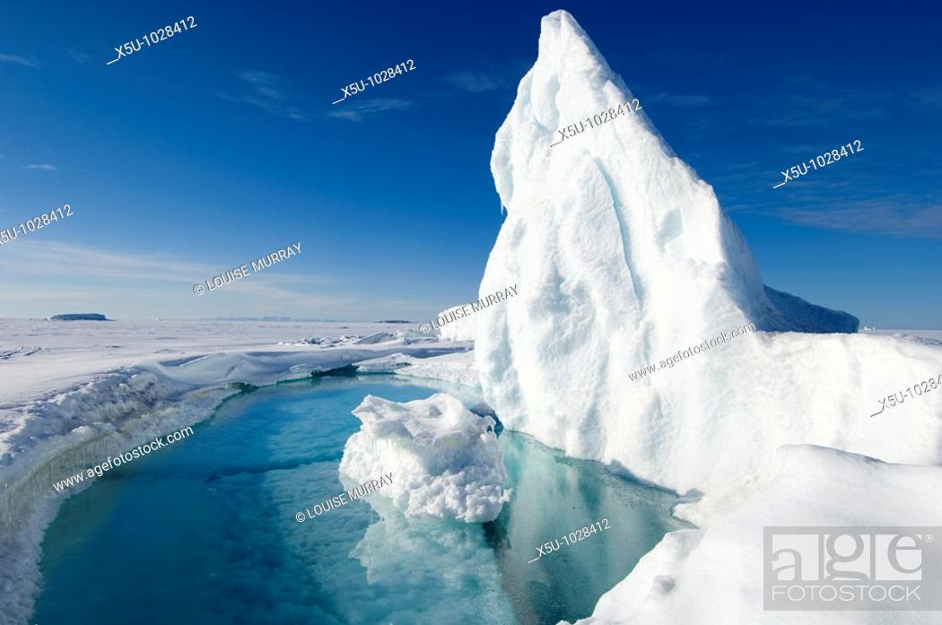 Stock Photo: During the Arctic spring, the surface of the frozen arctic ocean begins to crack under stress especially around large frozen in icebergs which flex the.