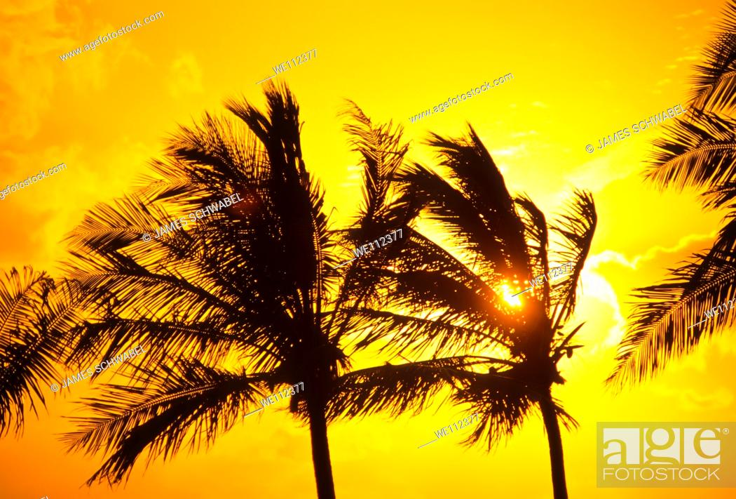 Stock Photo: Palm trees silhouetted aganist sunset sky in Key Largo in the Florida Keys.