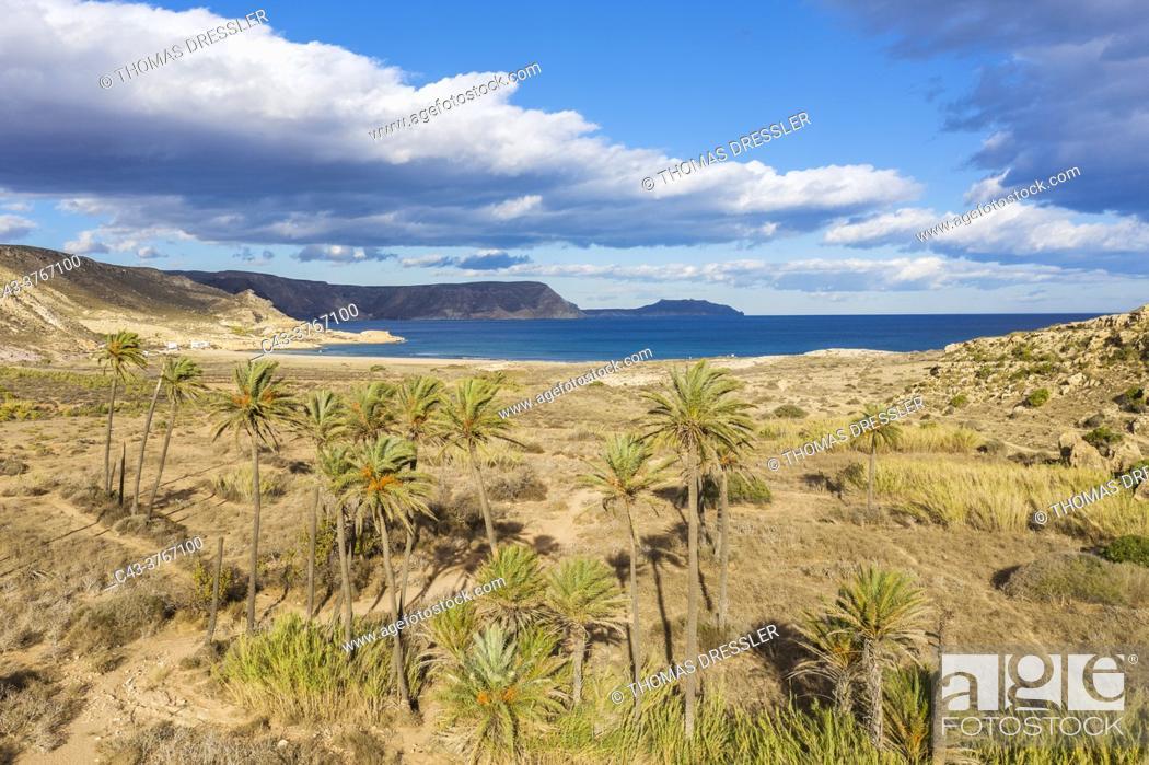 Stock Photo: Palms at the beach El Playazo. Aerial view. Drone shot. Nature Reserve Cabo de Gata-Nijar, Almeria province, Andalusia, Spain.