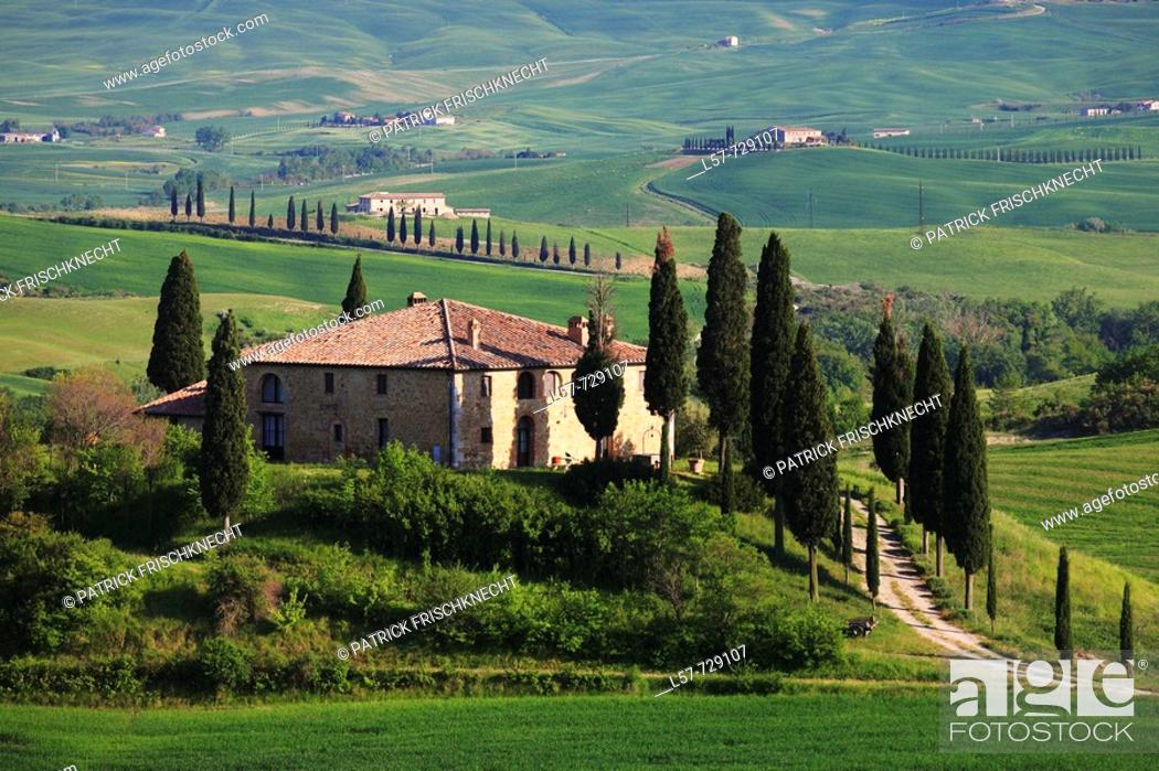 Stock Photo: Cypress, Italian Cypress, Cupressus sempervirens, country house, farm house, hill countryside, agricultural landscape, Tuscany, Italy.