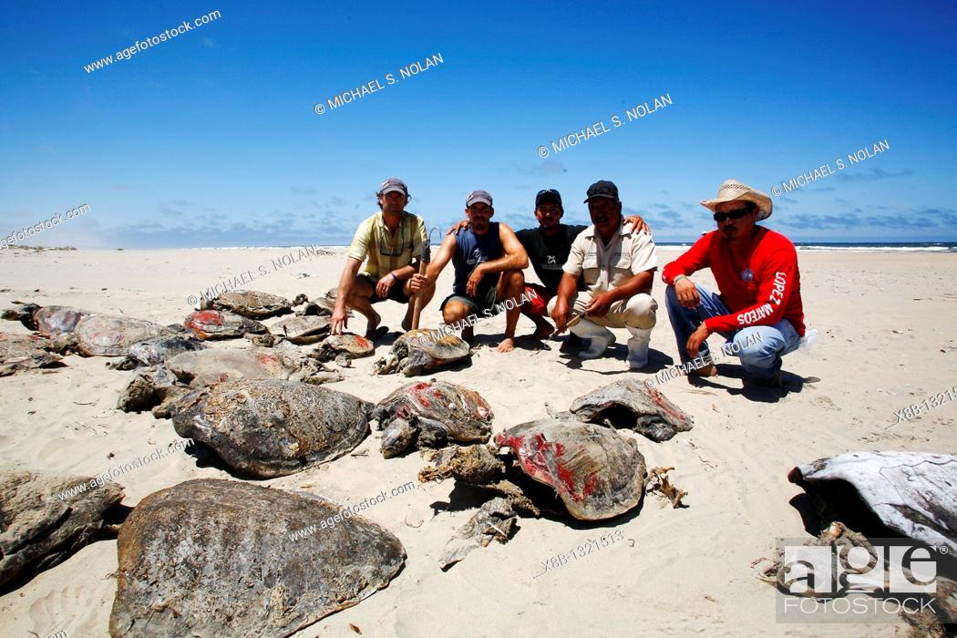Stock Photo: Turtle researchers from the NGO Pro Caguama study and capture the critically endangered Loggerhead Turtle Caretta caretta from the town of Puerto Lopez Mateos.