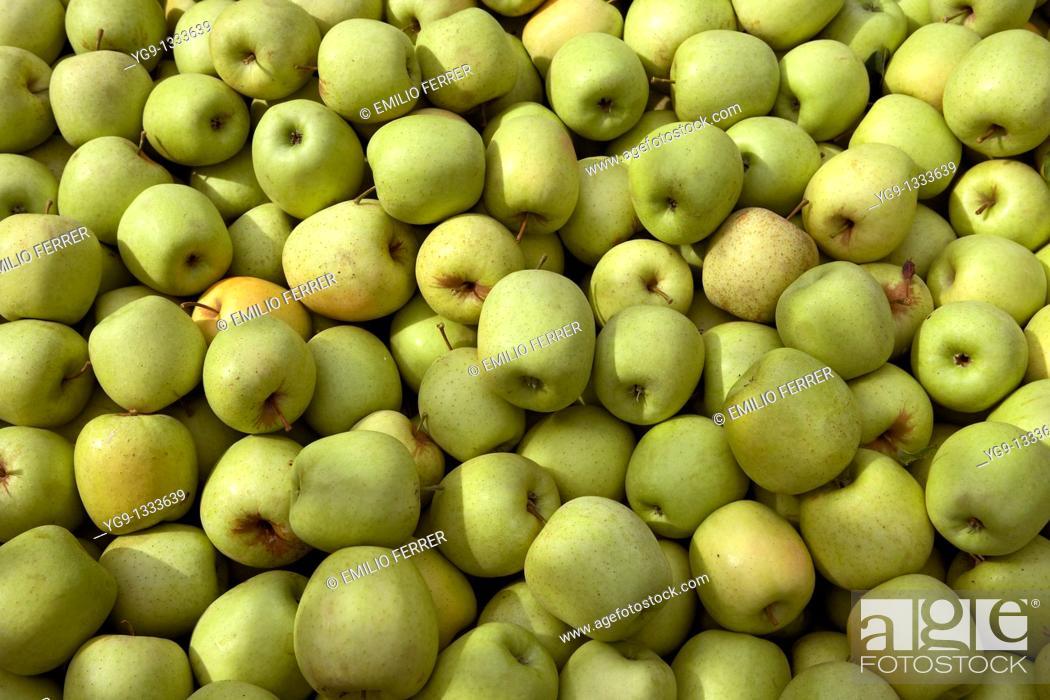Stock Photo: Apple Golden  LLeida  Spain.