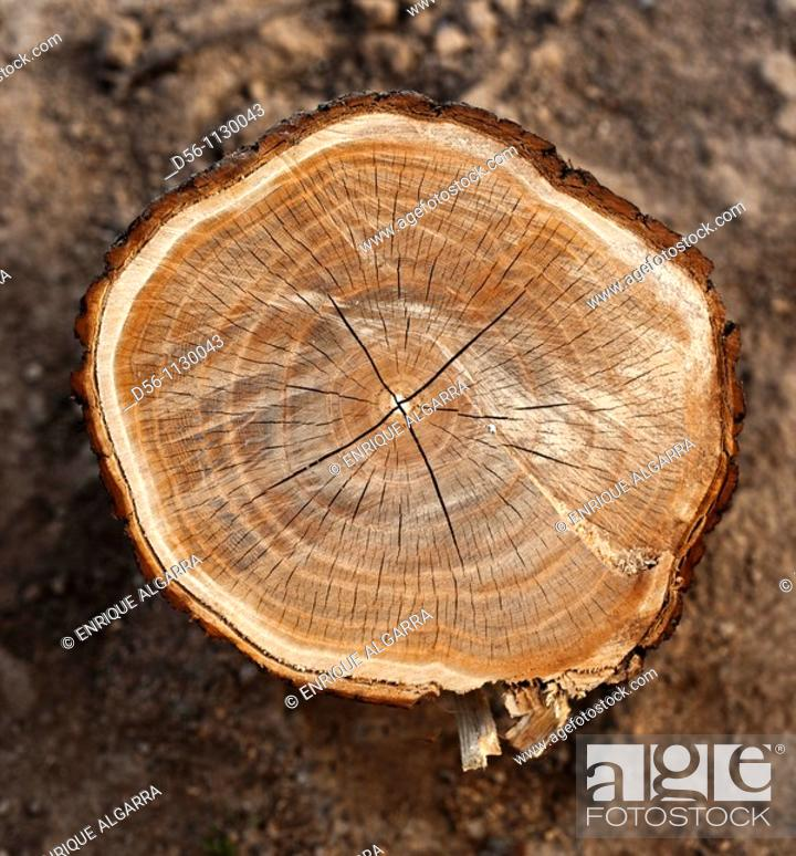 Stock Photo: log.