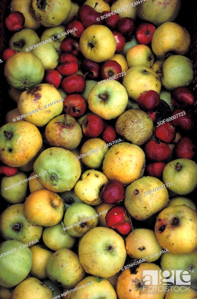 Stock Photo: Apples.
