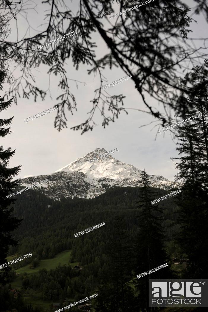 Imagen: Grossglockner peak seen through tree branches, Austria Alps, Carinthia, Austria.