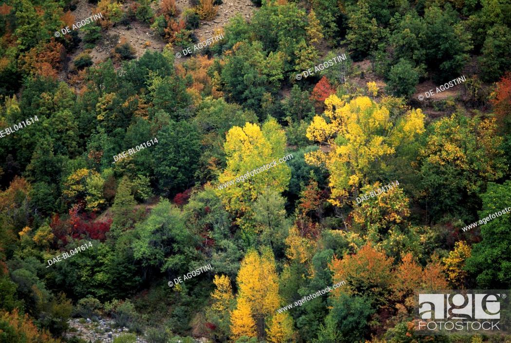 Imagen: Coniferous vegetation, Zagoria, Epirus, Greece.