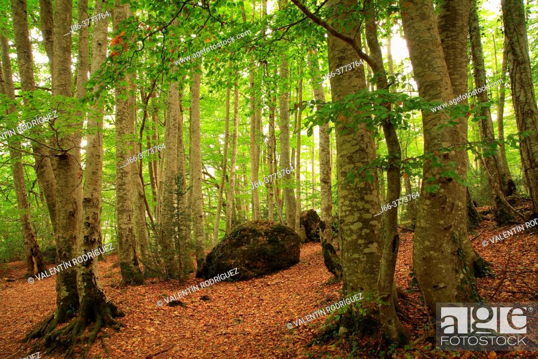 Stock Photo: Betato forest in Piedrafita de Jaca. Tena valley. Huesca.