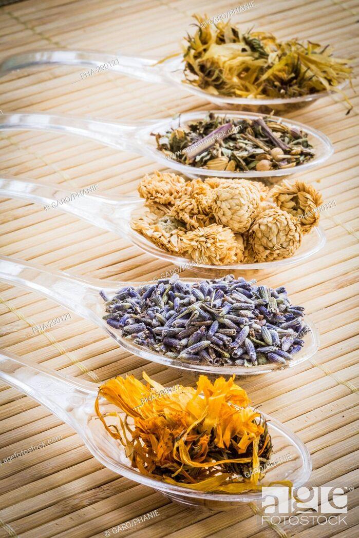 Imagen: Medicinal herbs, assortment of dried herbs.