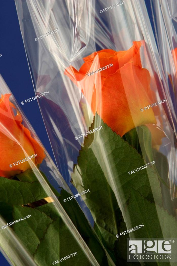 Stock Photo: stamen, petal, blossom, flower, flora, plant.