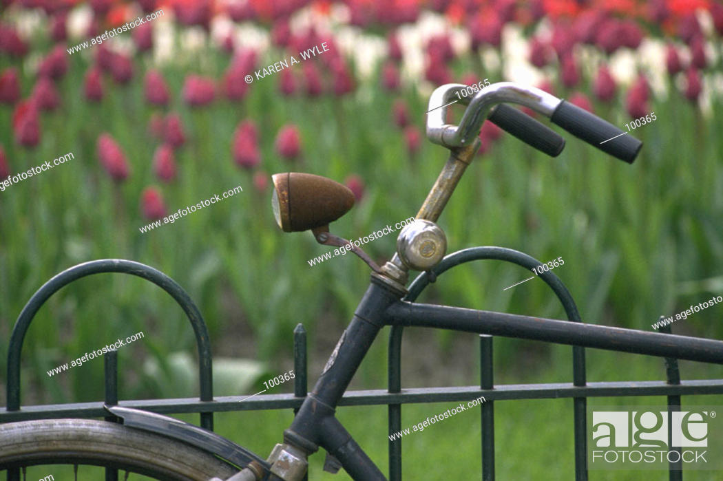 Stock Photo: Bicycle parked near bed of tulips, Amsterdam, the Netherlands.