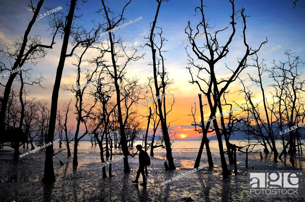 Stock Photo: Silhouette of a woman hiking among trees and mangrove at sunset at Telok Assam beach. Malaysia, Borneo, Sarawak, Bako National Park. Model Released.