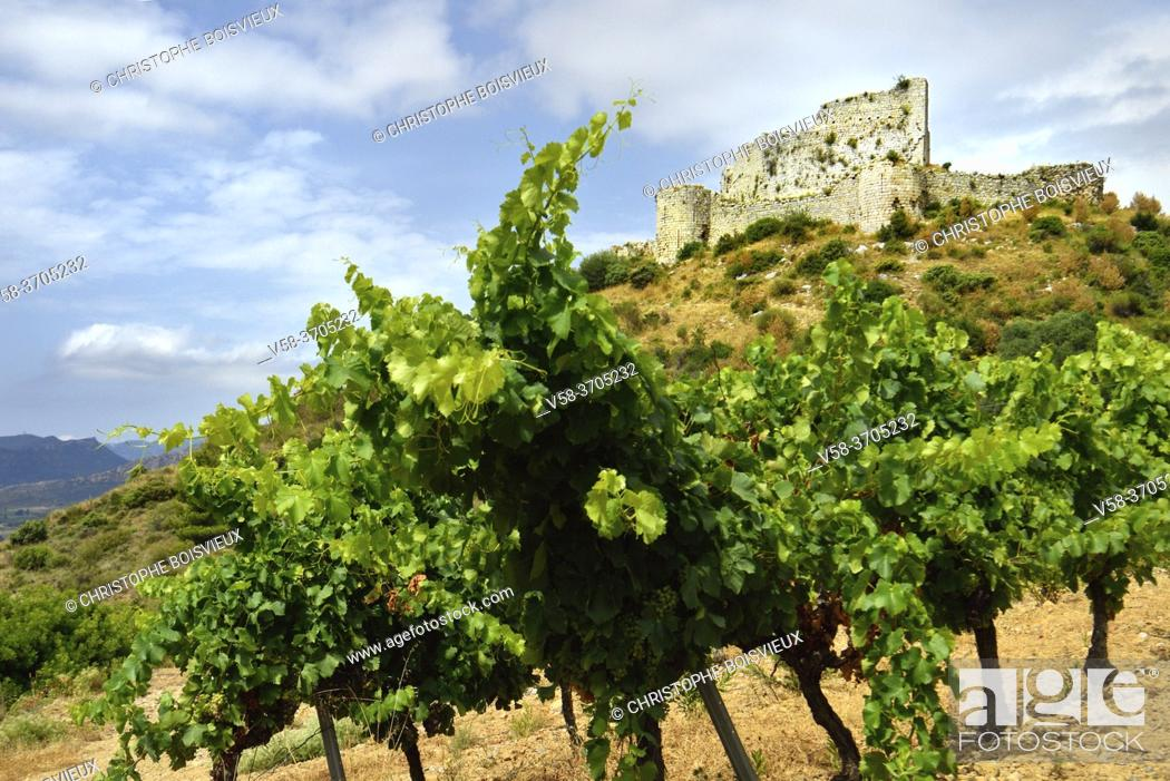 Stock Photo: France, Aude, Aguilar castle and Tuchan vineyard.