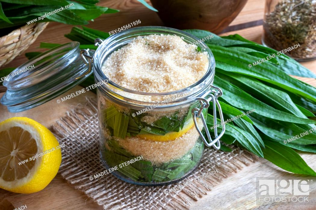 Stock Photo: A jar filled with fresh ribwort plantain leaves, lemon and cane sugar, to prepare homemade herbal syrup against cough.