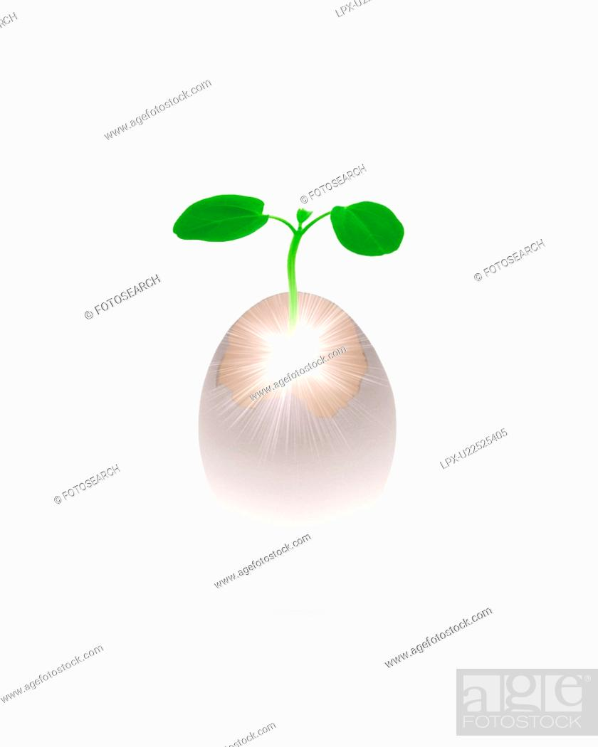 Stock Photo: Sapling born from an egg.