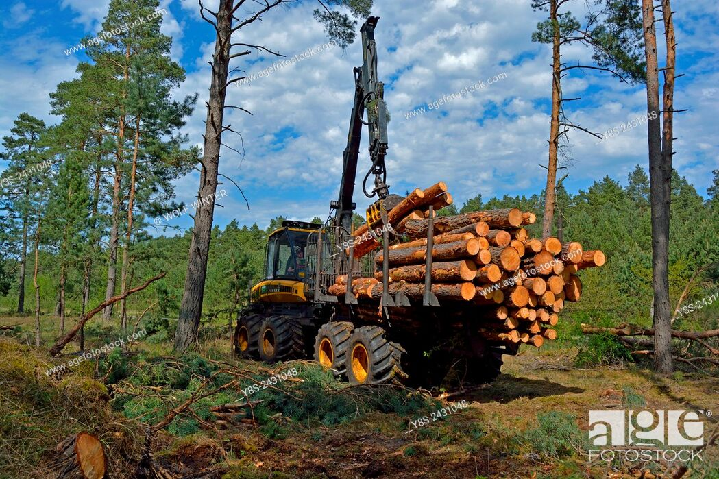Stock Photo: Charging a Forwarder. Wood Harvest after a Storm, Gifhorn, Lower Saxony, Germany.