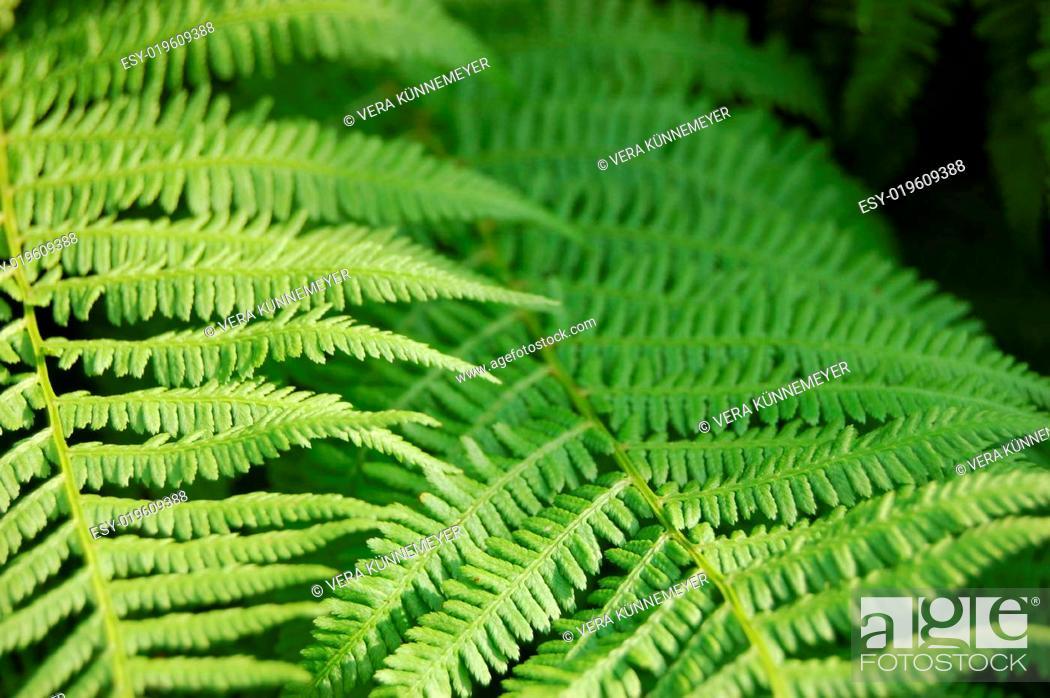 Farn Aus Meinem Garten Stock Photo Picture And Low Budget Royalty
