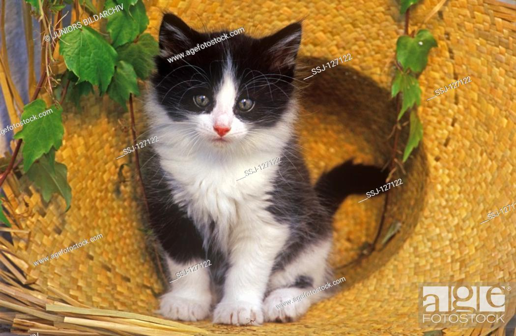 Stock Photo: young kitten in straw hat.
