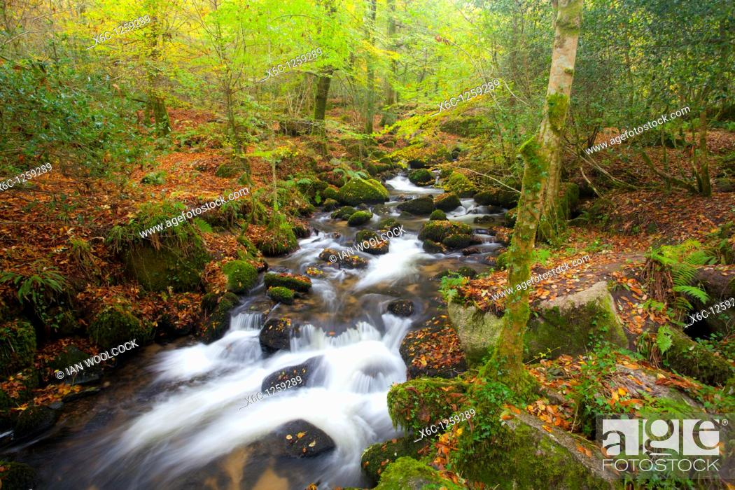 Stock Photo: Autumn waterfall in the woods at Kennall Vale nature reserve Cornwall England.