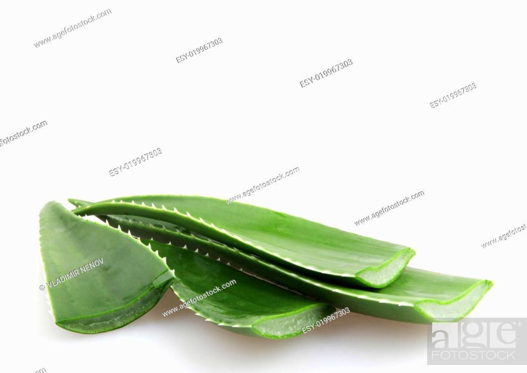 Stock Photo: Aloe vera.