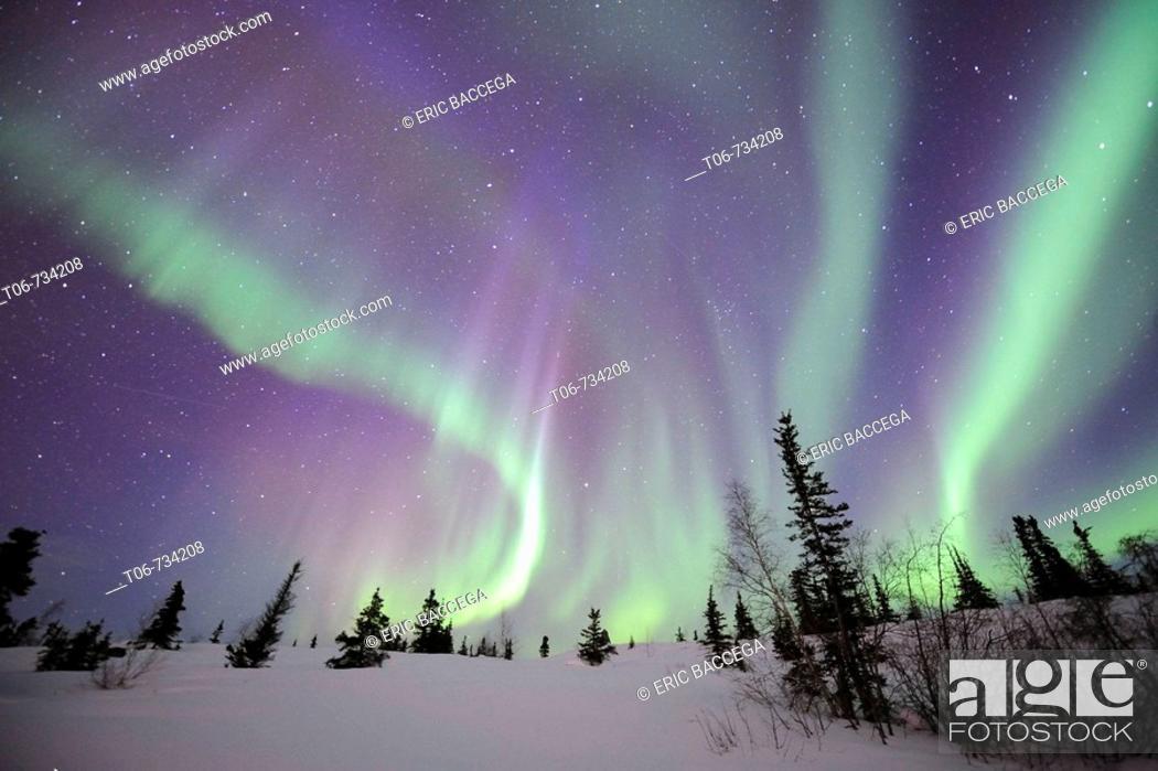 Stock Photo: Northern lights (Aurora borealis) Northwest territories, March 2008, Canada.